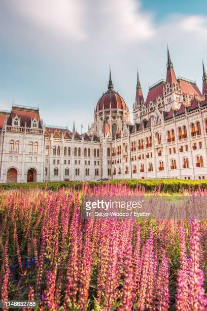 flowers against hungarian parliament building on sunny day - ブダペスト ストックフォトと画像