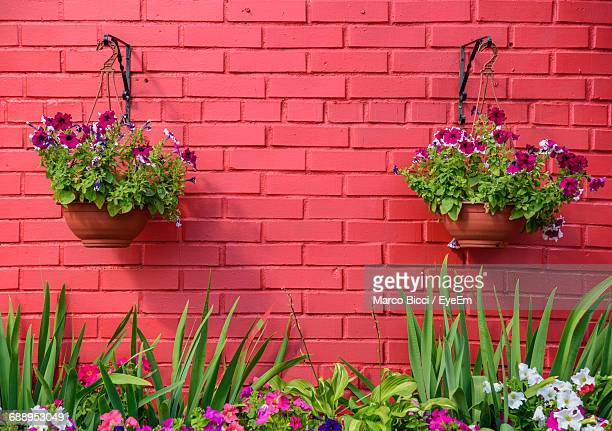 flowers against pink wall - hanging basket stock pictures, royalty-free photos & images