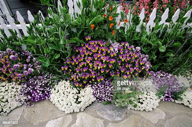 Flowers along picket fence