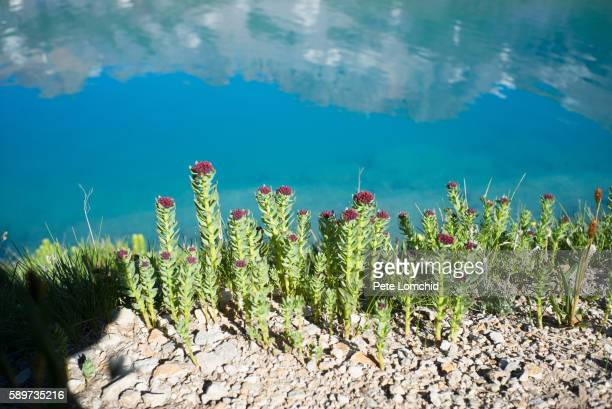 flowers and blue lake