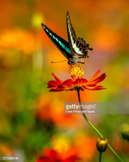 flowers and butterflies - biodiversity stock pictures, royalty-free photos & images