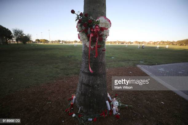 Flowers and candles are placed around a palm tree to honor victims of the mass shooting at Marjory Stoneman Douglas High School at Pine Trail Park on...