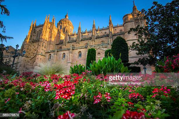 Flowers and Catedral de Salamanca. Salamanca, Spain.