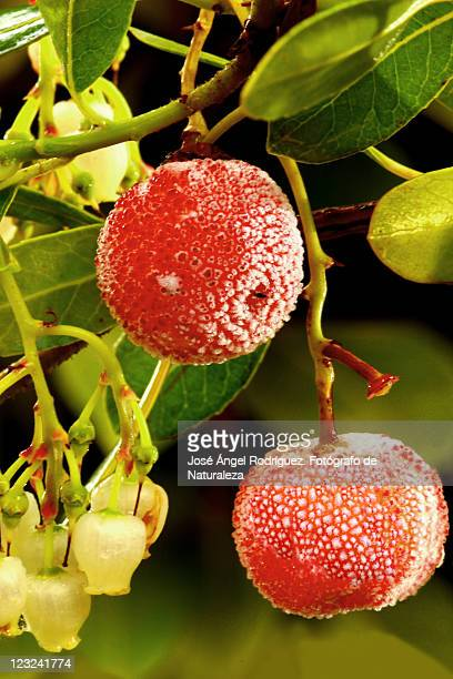 flowers and fruits of madr - fotógrafo stock photos and pictures