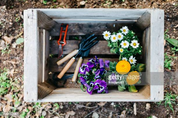 flowers and gardening tools in a crate in garden - pansy stock pictures, royalty-free photos & images