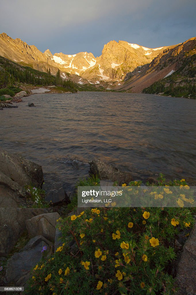 Flowers and Lake Isabelle near Boulder, Colorado : Stock Photo