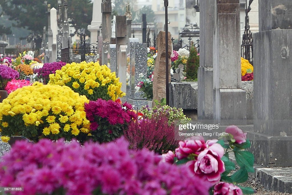 Flowers And Plants At Cemetery : Photo
