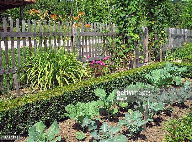 Flowers and vegetables in the garden