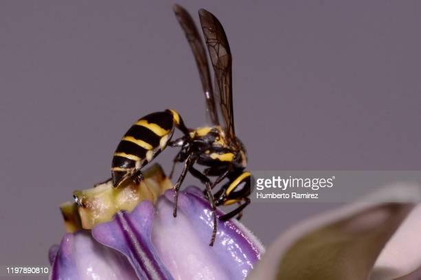 flowers and wasp. - nido di vespe foto e immagini stock