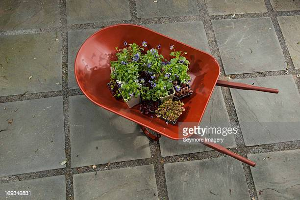 flowers and wheel barrow - wheelbarrow stock pictures, royalty-free photos & images