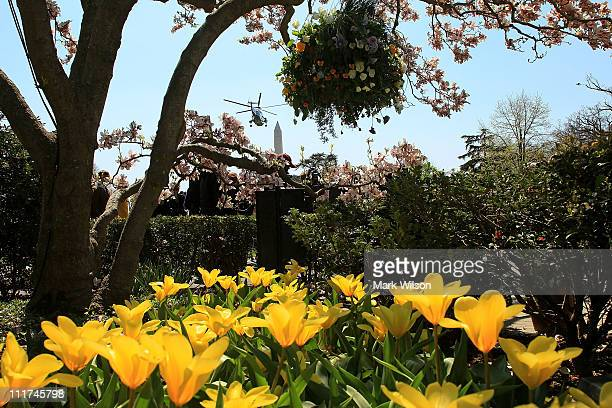 Flowers are in bloom in the Rose Garden as Marine One carrying US President Barack Obama takes off from the south lawn of the White House on April 6...