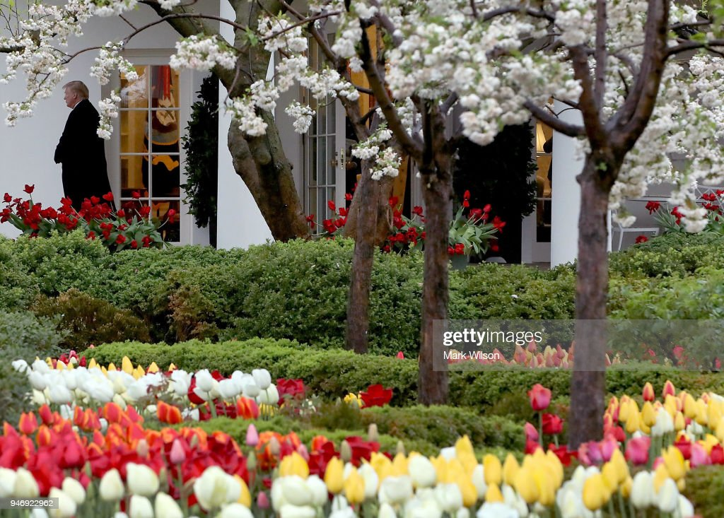 Flowers are in bloom in the Rose Garden as U.S. President Donald Trump walks out of the Oval Office toward Marine One while departing from the White House, on April 16, 2018 in Washington, DC. President Trump is traveling to Hialeah, Florida where he will participate in a small business roundtable discussion on tax cuts.