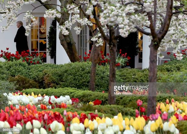 Flowers are in bloom in the Rose Garden as U.S. President Donald Trump walks out of the Oval Office toward Marine One while departing from the White...