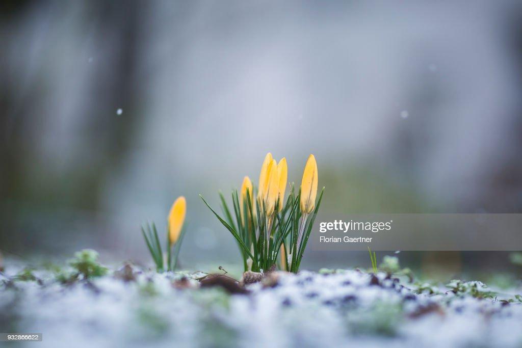 Spring : News Photo