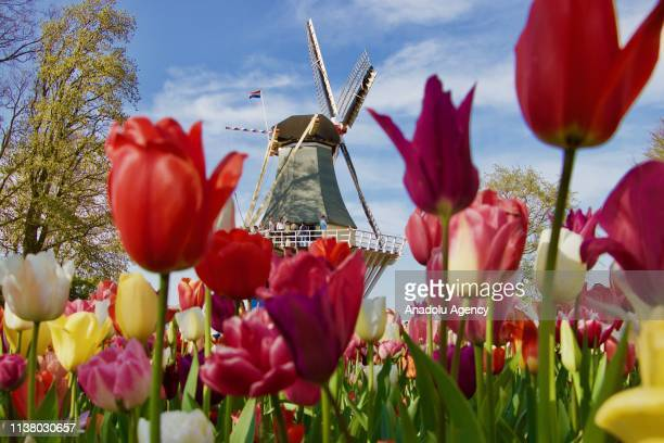 Flowers are seen at the Keukenhof one of the world's largest flower and tulip garden in Lisse Netherlands on April 18 2019 This year's theme of the...