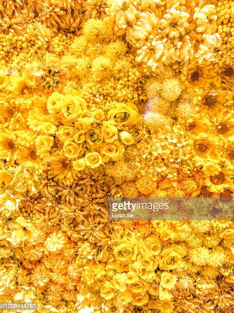 flowers arrangement - liyao xie stock pictures, royalty-free photos & images