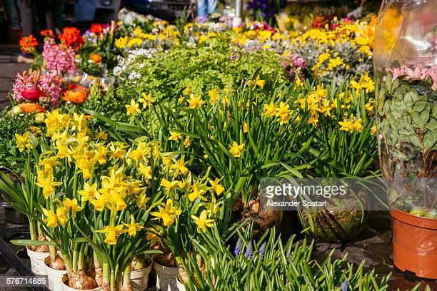 Flowers at Campo de Fiori market, Rome, Italy