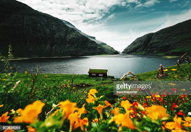 flowers at faroe islands