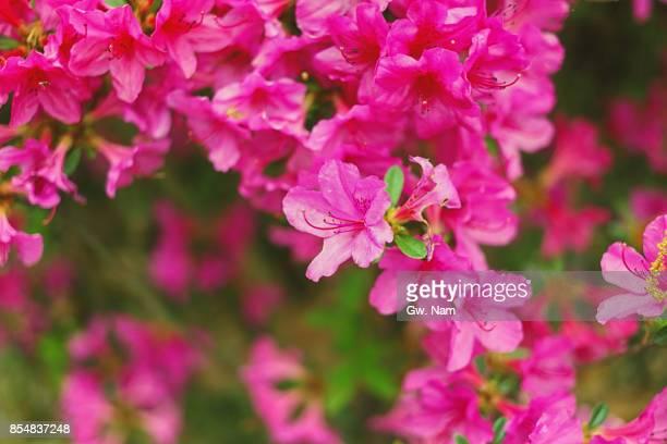flowers at public park - 五月 ストックフォトと画像