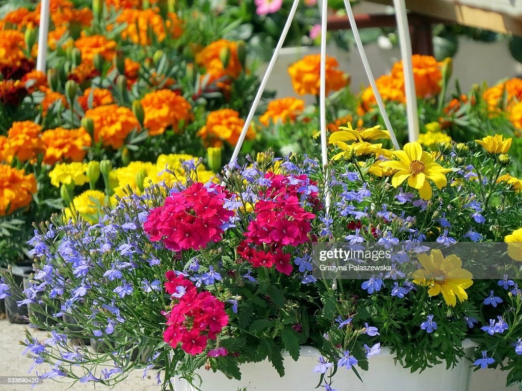 Flowers at the town market : Foto stock