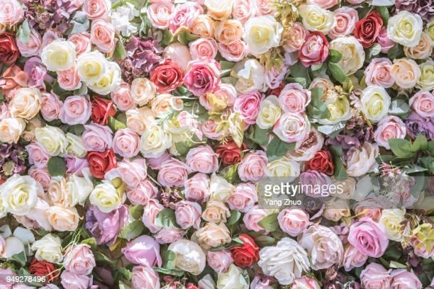 flowers backgrouds