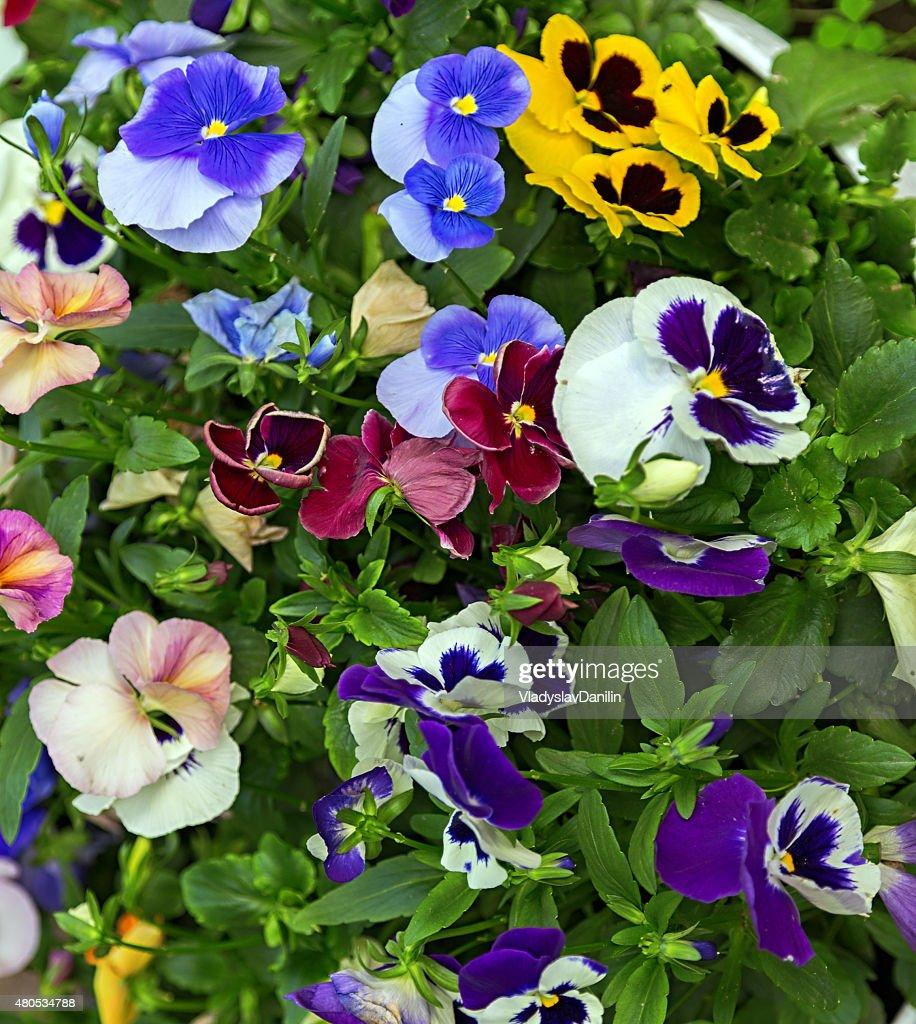 flowers background : Stock Photo