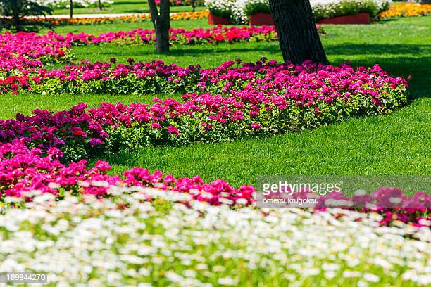 Flowers Bed
