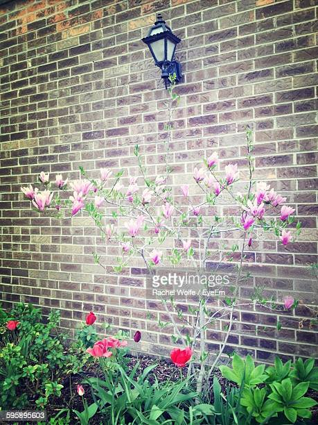 flowers blooming against brick wall - rachel wolfe stock pictures, royalty-free photos & images