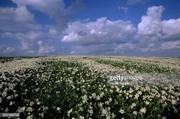Flowers Blooming at Tel Maresha, Israel