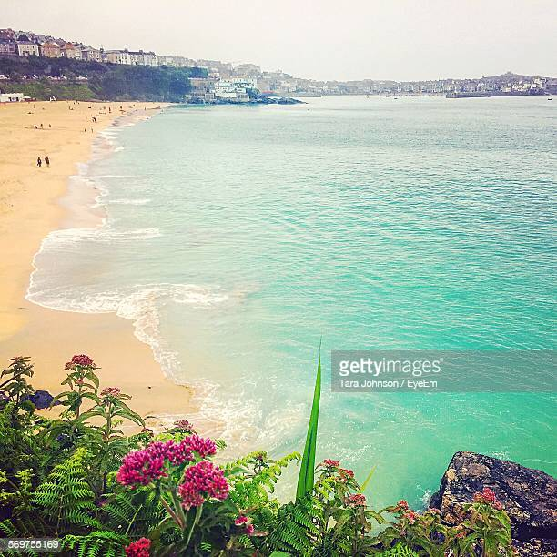 flowers blooming by beach - st ives stock pictures, royalty-free photos & images