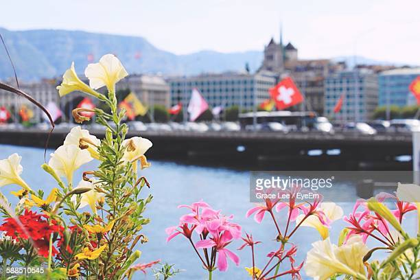 Flowers Blooming By River In City Against Sky