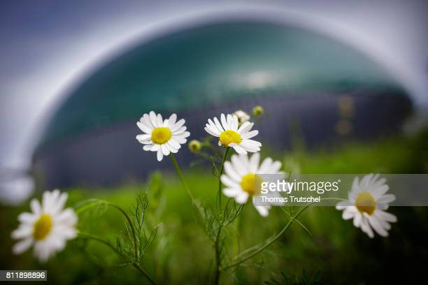Flowers blooming in front of a biogas plant on a farm on July 10 2017 in Lanke Germany