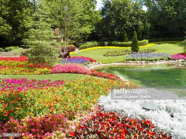flowers blooming in park - botanical garden stock pictures, royalty-free photos & images