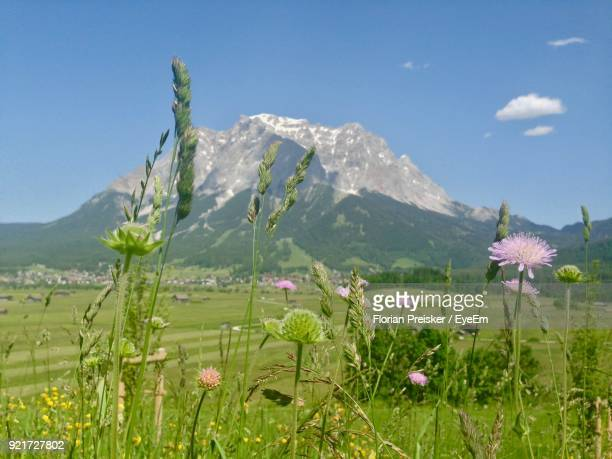 Flowers Blooming On Field Against Mountains