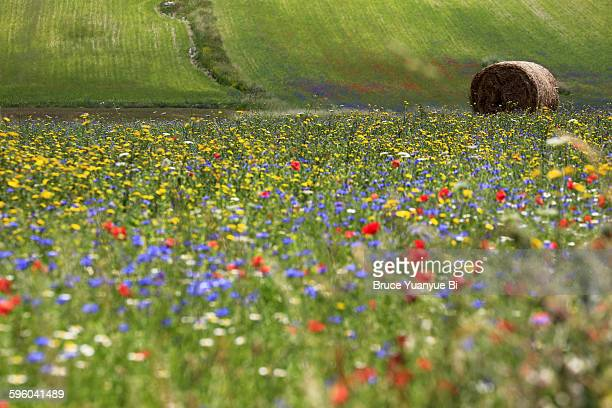 Flowers blooming on the field