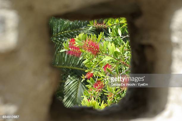 Flowers Blooming Outdoors Seen Through Rock Hole
