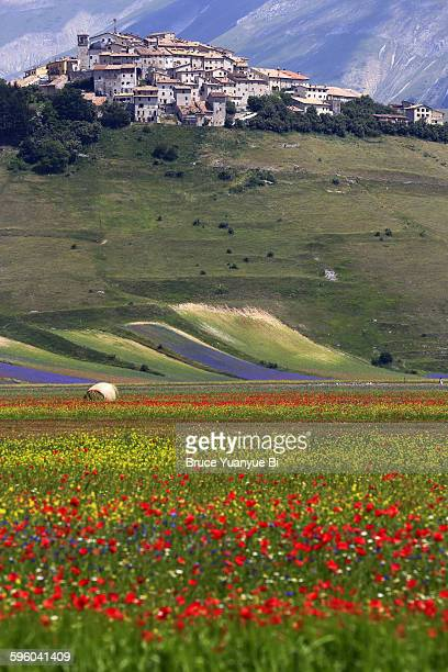 flowers blooming with town of castelluccio - カステッルッチョ ストックフォトと画像