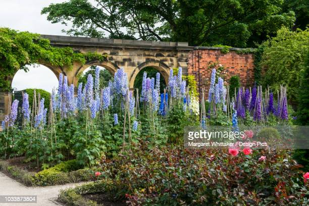 flowers blossoming in the alnwick garden - alnwick stock pictures, royalty-free photos & images