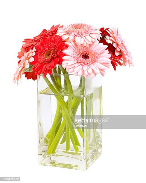 Flowers, Bouquet of pink and red gerbera daisies in vase
