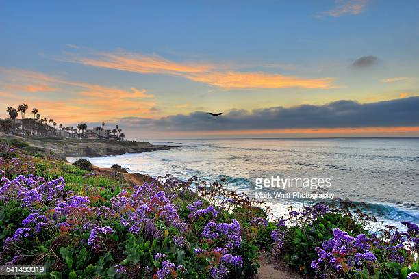 flowers by the ocean - brown pelican stock photos and pictures