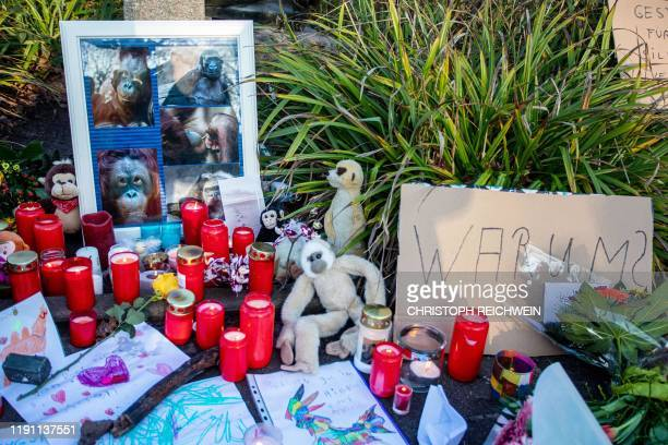 Flowers candles stuffed animals and placards are placed at a makeshift memorial for the animals that died in a fire at the zoo's monkey house on...