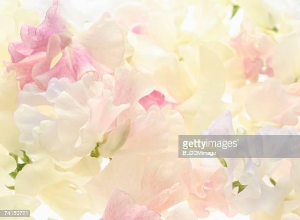 Flowers ,close-up