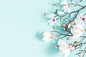 Flowers composition. Magnolia flowers on pastel blue background. Flat lay, top view, copy space