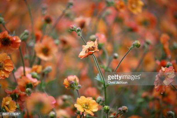 Flowers during a visit by Prince Charles Prince of Wales at Kew Gardens on May 17 2017 in London England