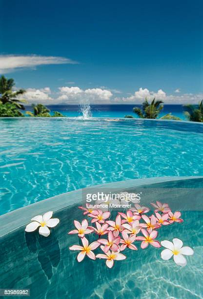 flowers floating on a pool overflowing on sea - fregate stock photos and pictures