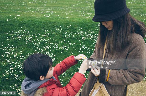 flowers for mother - peter lourenco stock pictures, royalty-free photos & images