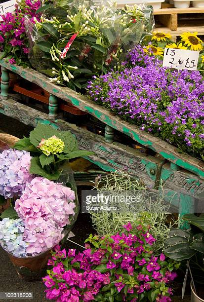flowers for sale at market stall - borough market stock pictures, royalty-free photos & images