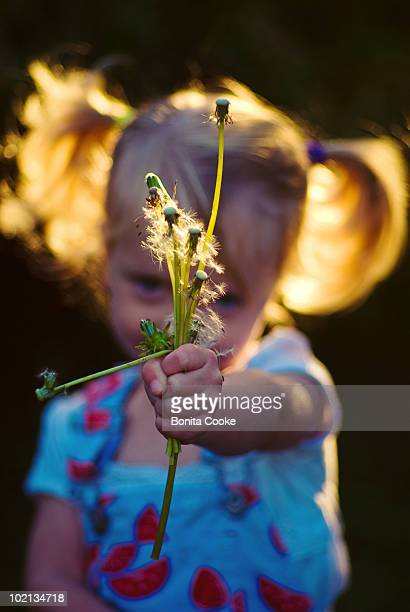 flowers (dandelion weeds) for you