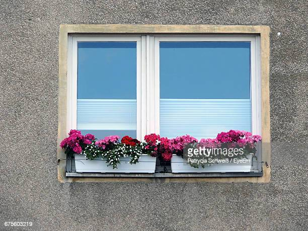 Flowers Growing At Closed Window