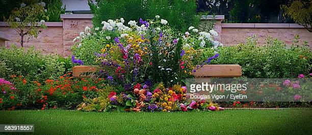 Flowers Growing At Formal Garden